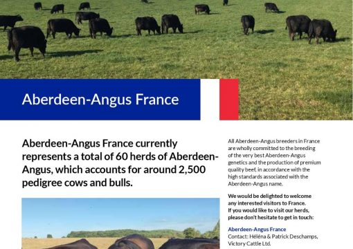 «THE REVIEW» THE ABERDEEN ANGUS CATTLE SOCIETY