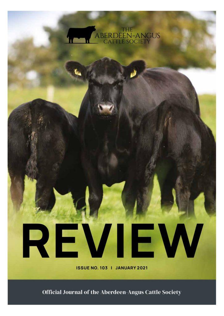 aberdeen angus cattle society